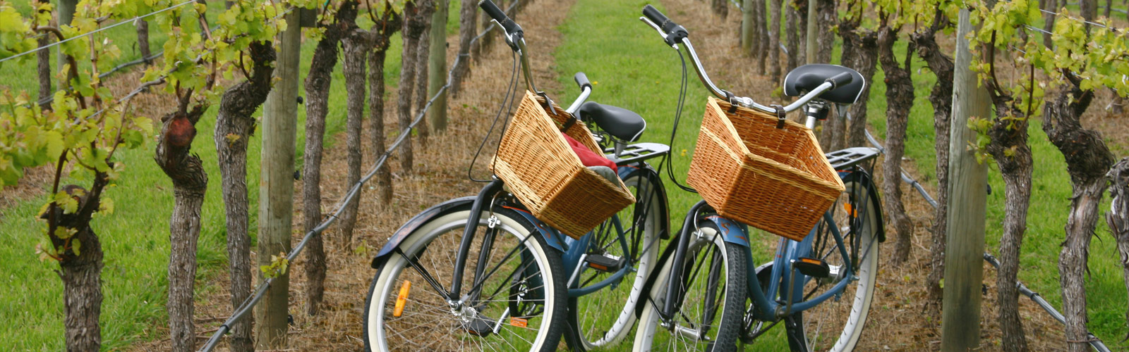 Cycling the Hunter Valley